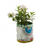 flower pot - large with plant